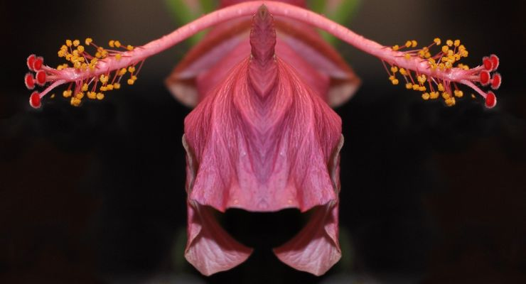 Fleur ou Alien ?