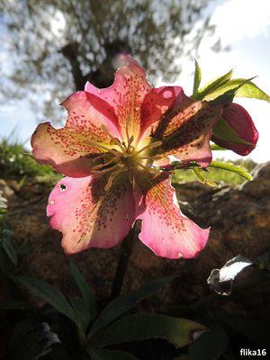 fleur percé de soleil