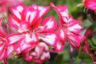 fleur prise en photo de pres