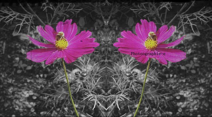 Fleur ( retoucheé )