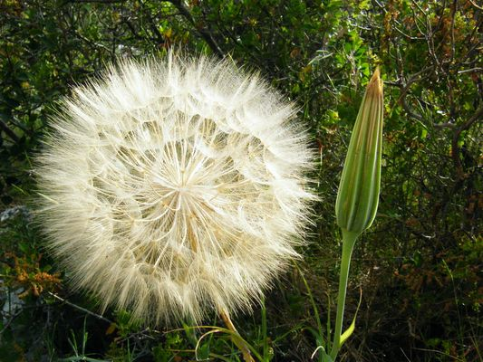 Fleur ronde