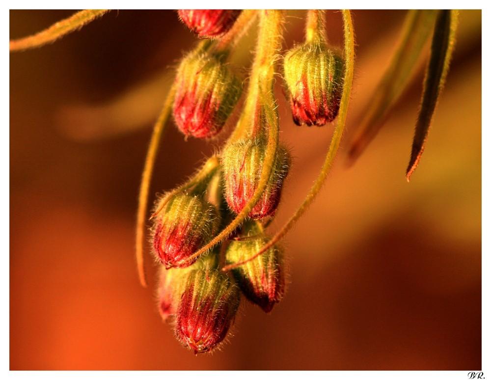 fleur sauvage d'hiver
