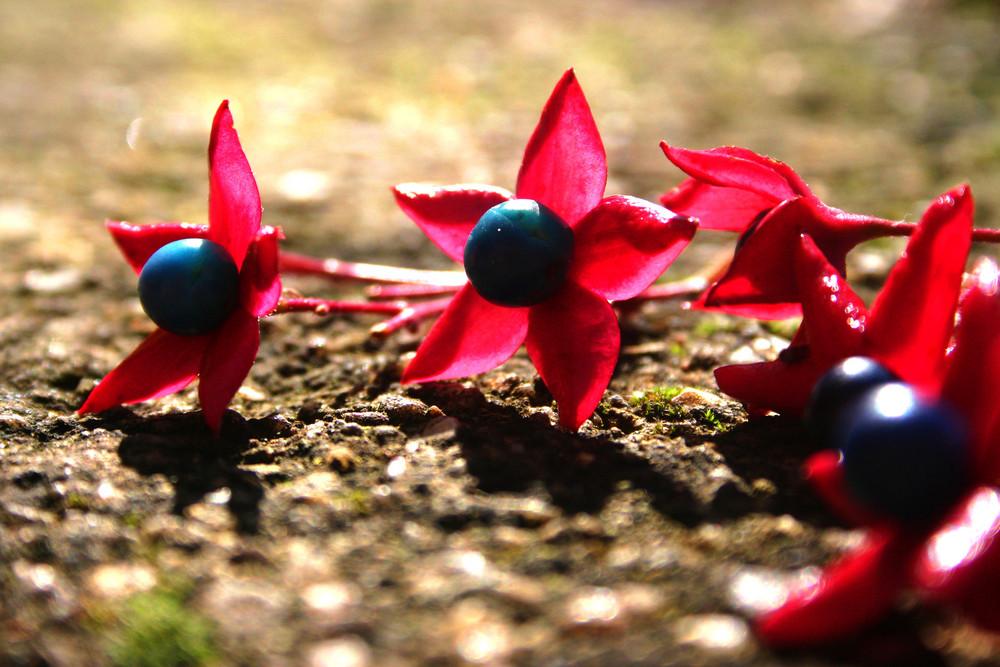 Fleur se mettant au soleil par se froid ^^