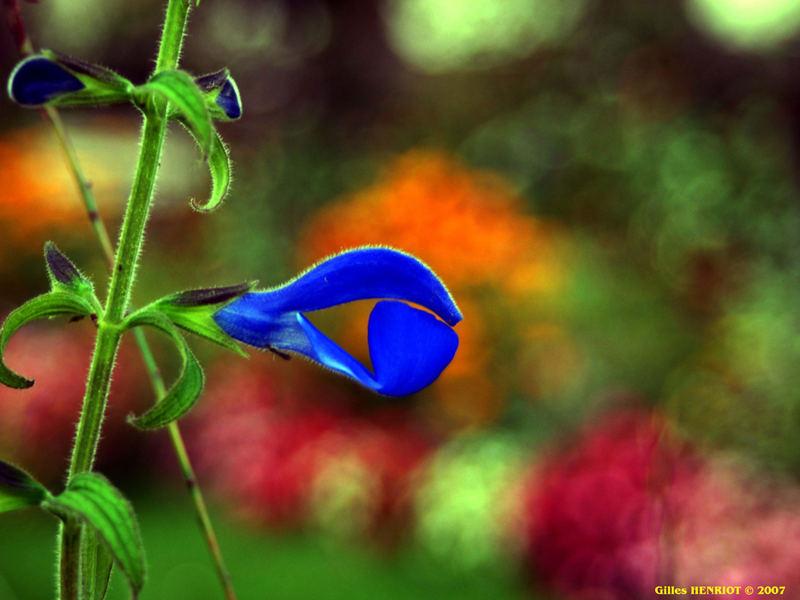 fleur sur flou