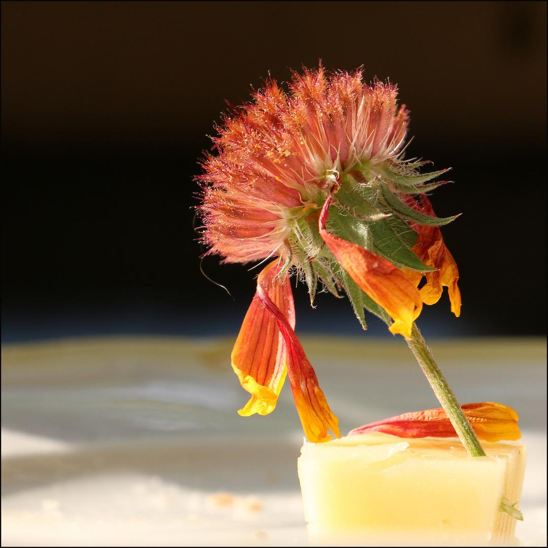 Fleur sur Fromage... ;-)