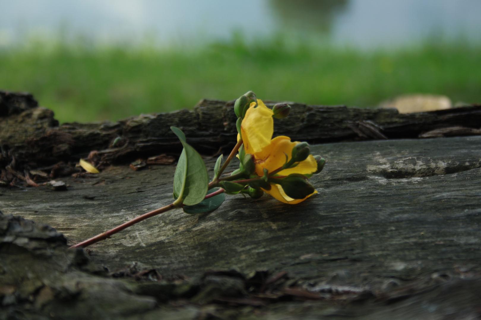 fleur sur tronc