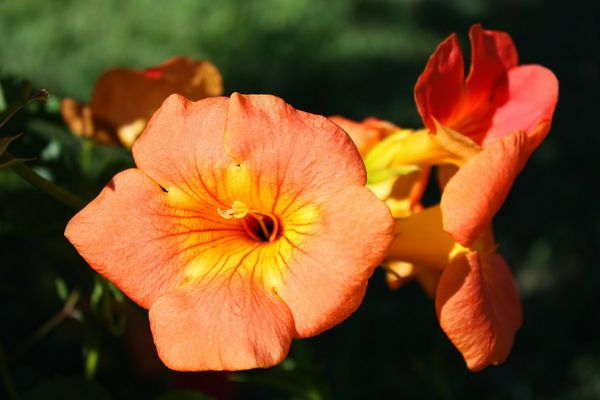 fleur ter