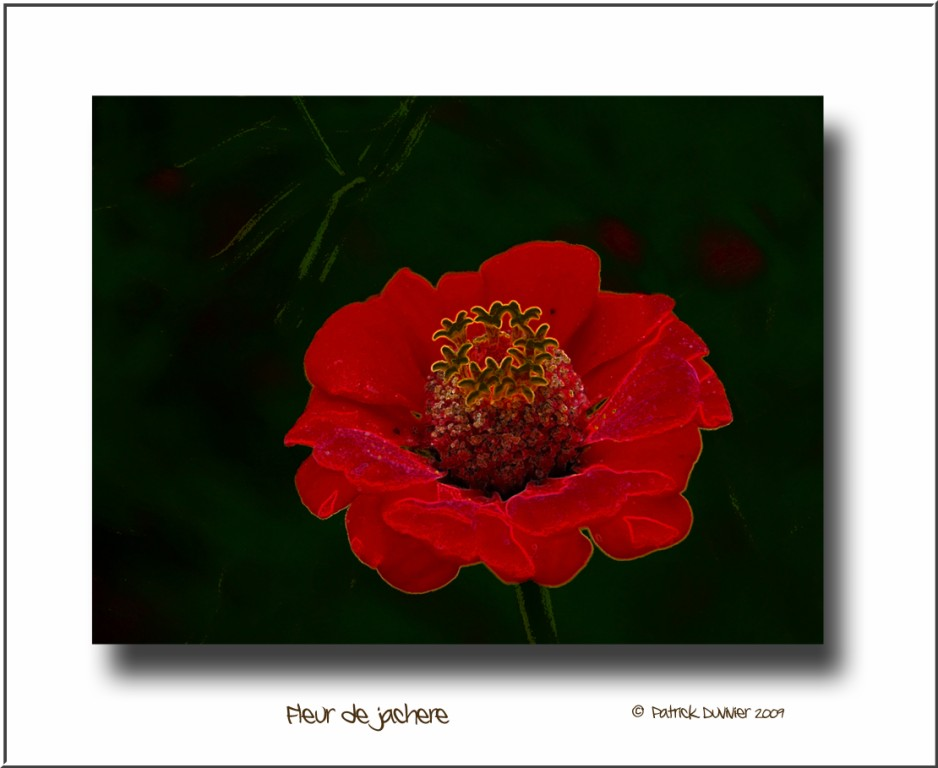 Fleur velours 1