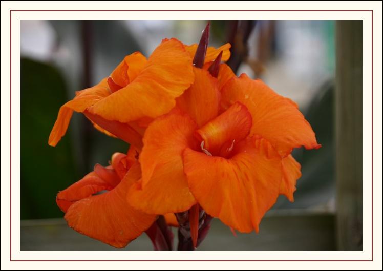 fleur vu en bretagne