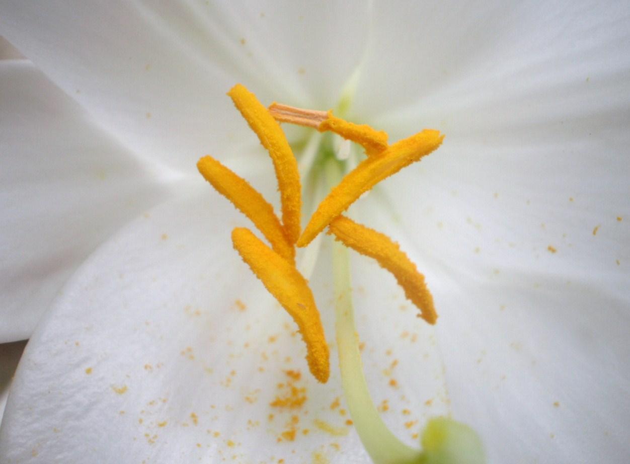 fleure...
