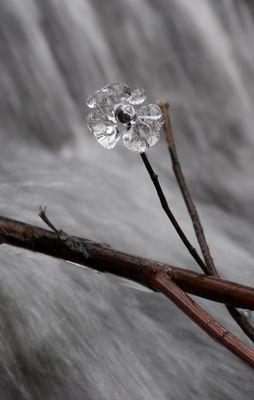 Fleure de glace
