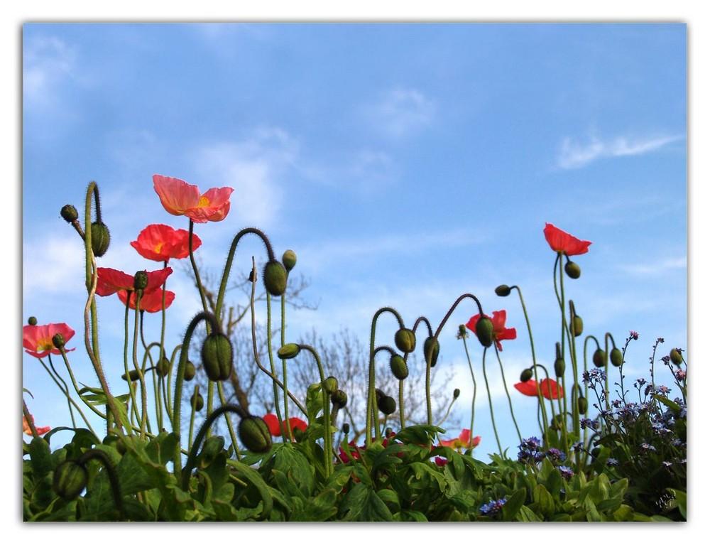 fleurir sous le ciel bleu