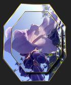 Fleurs 005