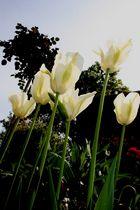 Fleurs =)