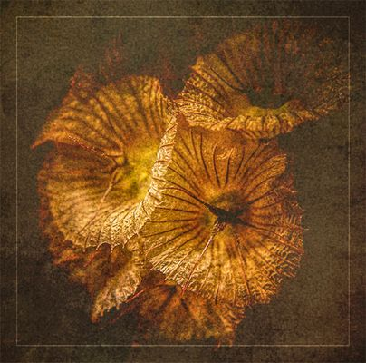 Fleurs à l'ancienne