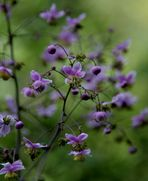 Fleurs aquarelle -