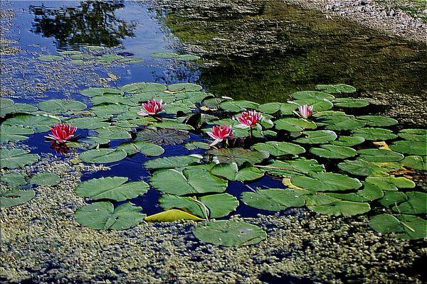 fleurs aquatique mode relief