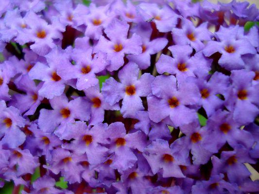 fleurs au papillorama