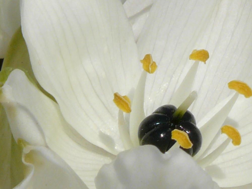 fleurs blanches... (nom inconnu)