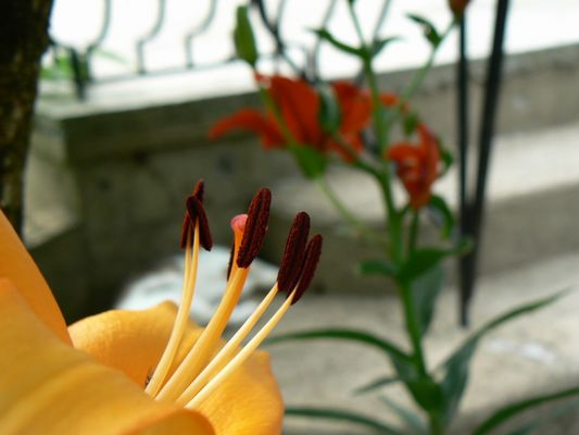 Fleurs , Bourgeons Ils arrivent ...