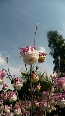 Fleurs Clochettes