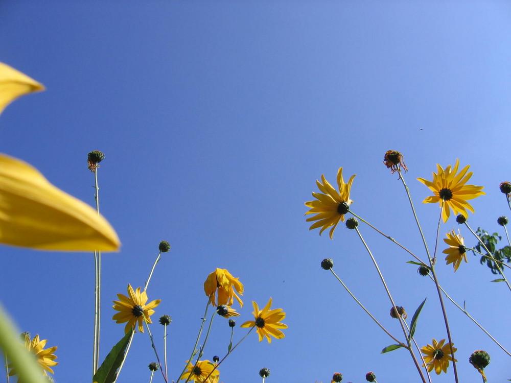 fleurs dans le ciel