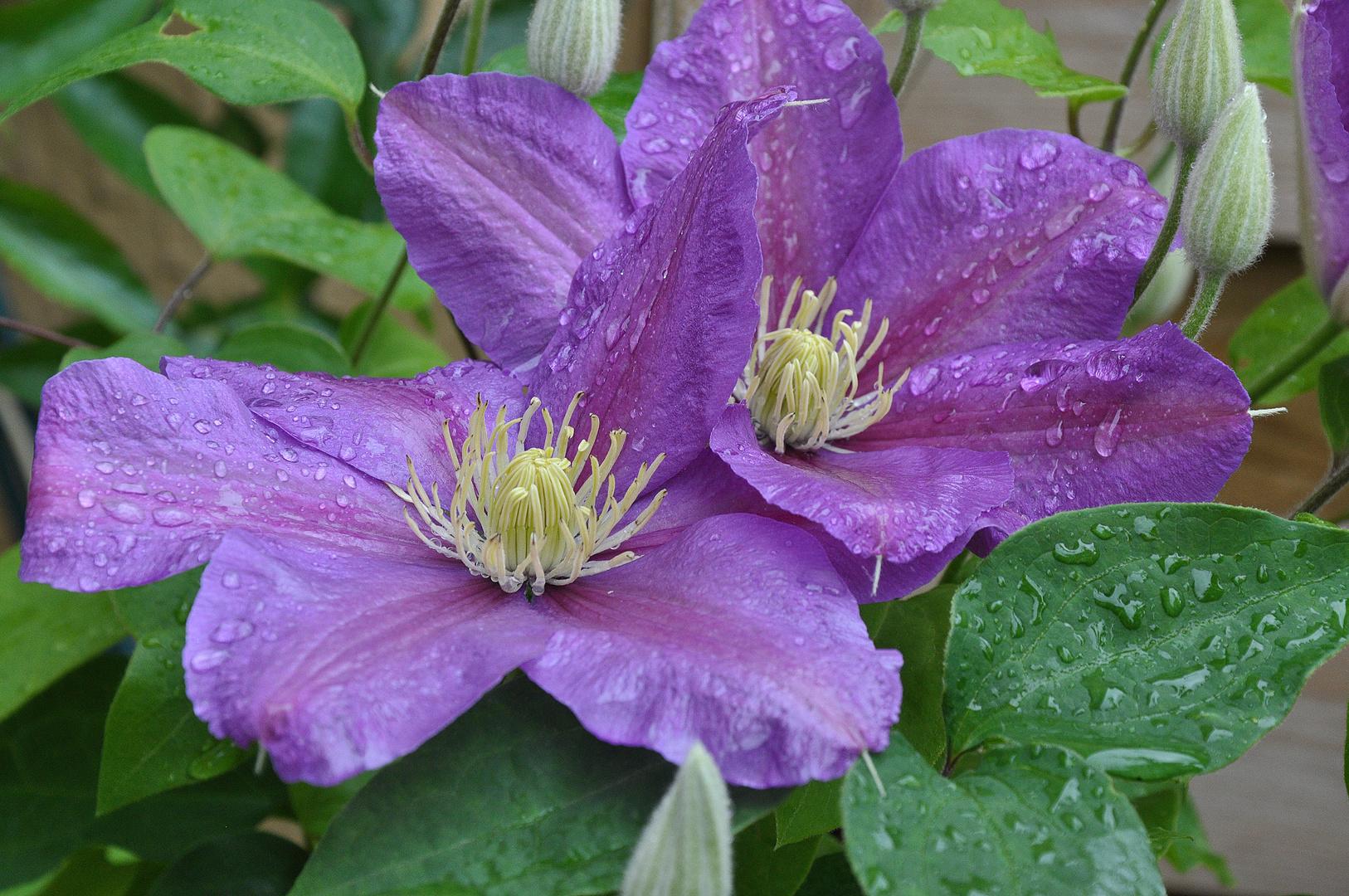 Fleurs dans mon jardin