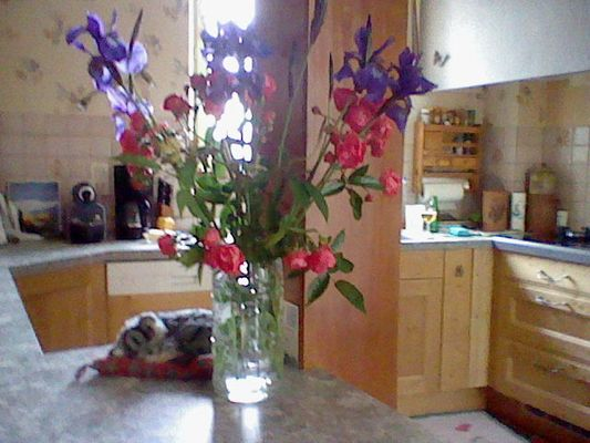 Fleurs dans un pot