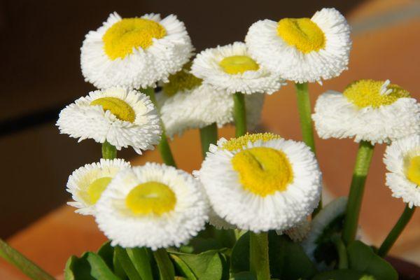 Fleurs de Gourmandise