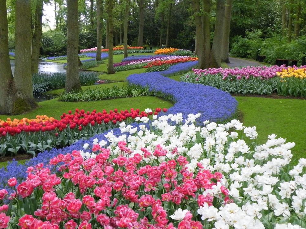 Fleurs de Keukenhof Pays-Bas