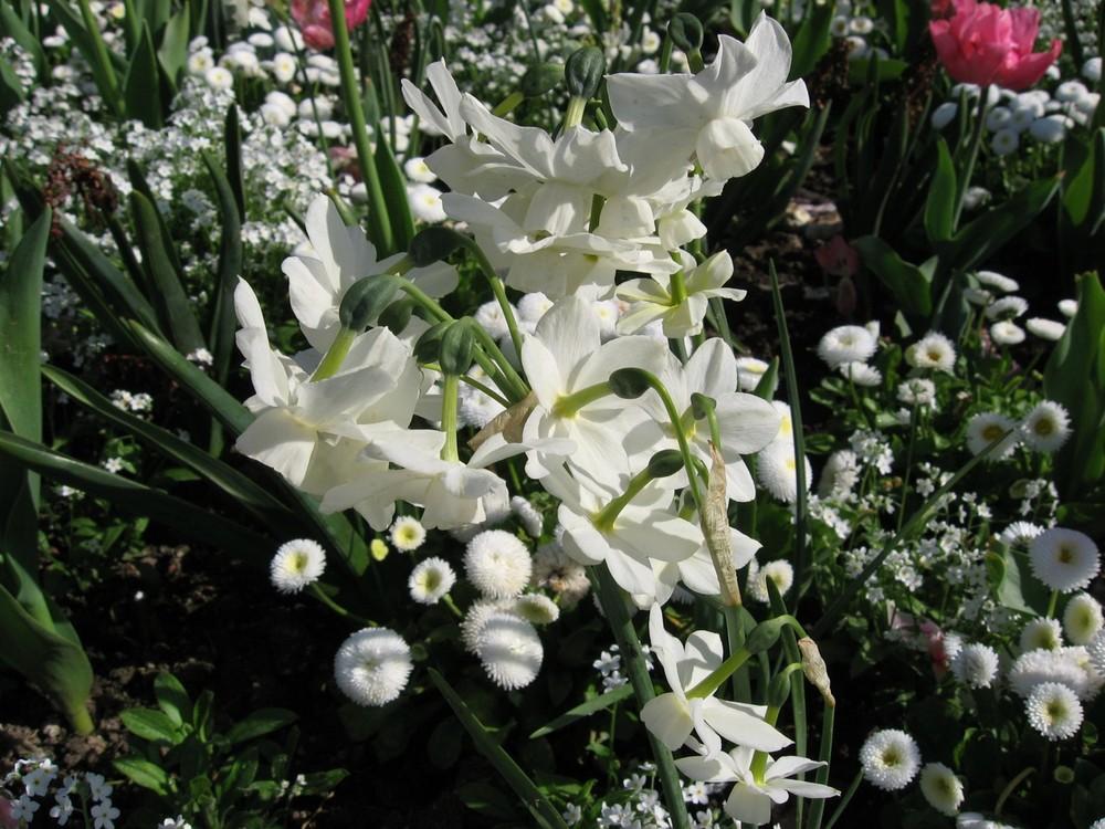 Fleurs de l'esplanade 3