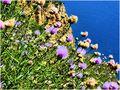 Fleurs de mer von JeanPierre