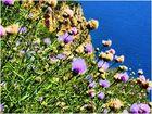 Fleurs de mer