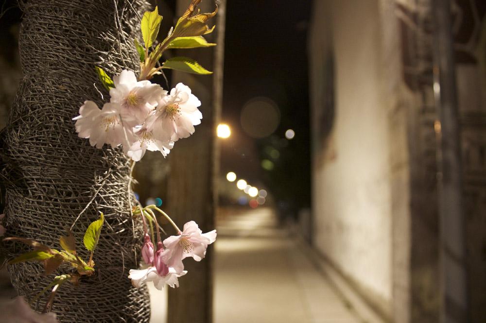 Fleurs de nuit