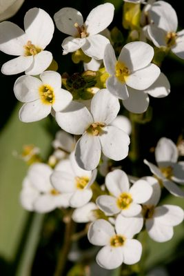 fleurs de printemps...2