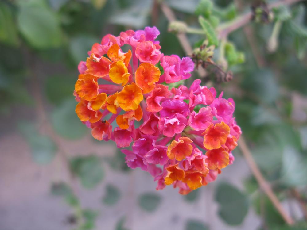 fleurs de Sardaigne