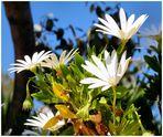 Fleurs de soleil