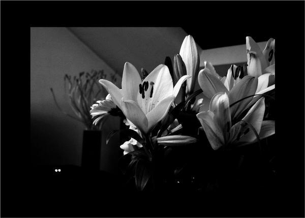 Fleurs de Son Coeur ..