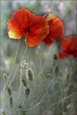 Fleurs des temps