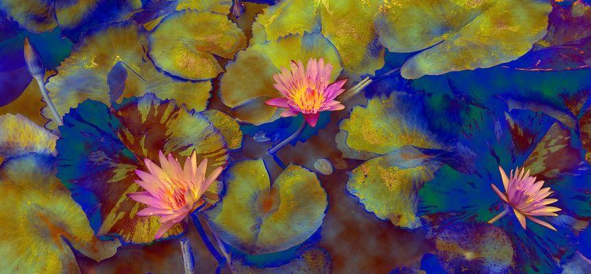 Fleurs d'étang