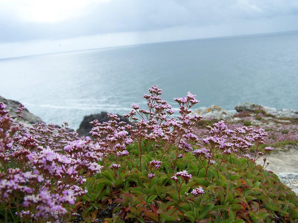 Fleurs du bord de mer