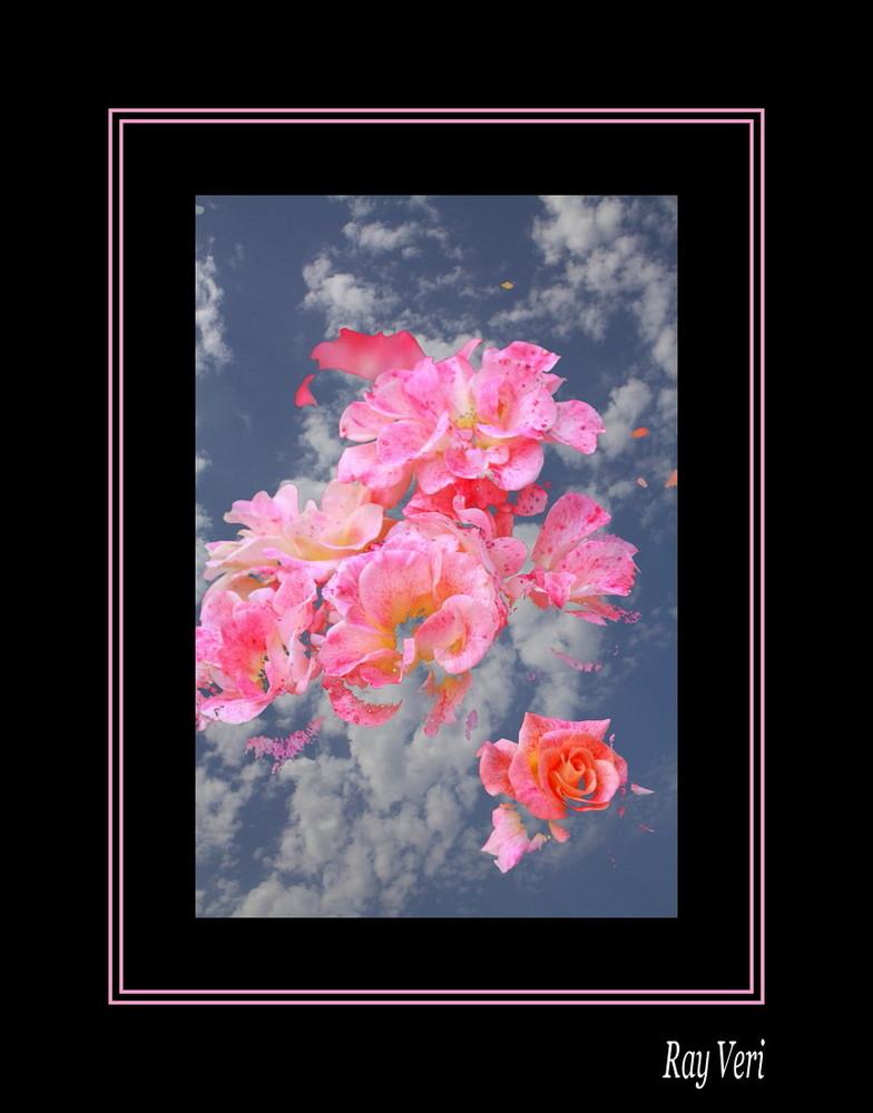 Fleurs du Ciel