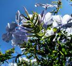 Fleurs du lundi..