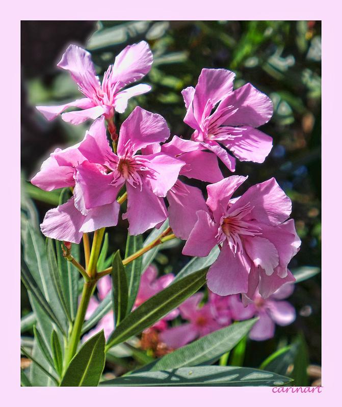 fleurs du sud / blumen aus dem süden photo et image   fleurs