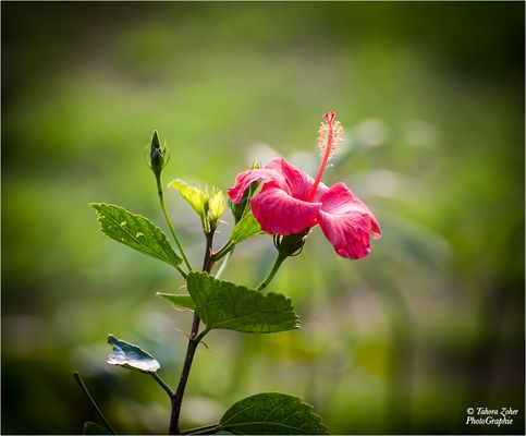 Fleurs du Taj Mahal