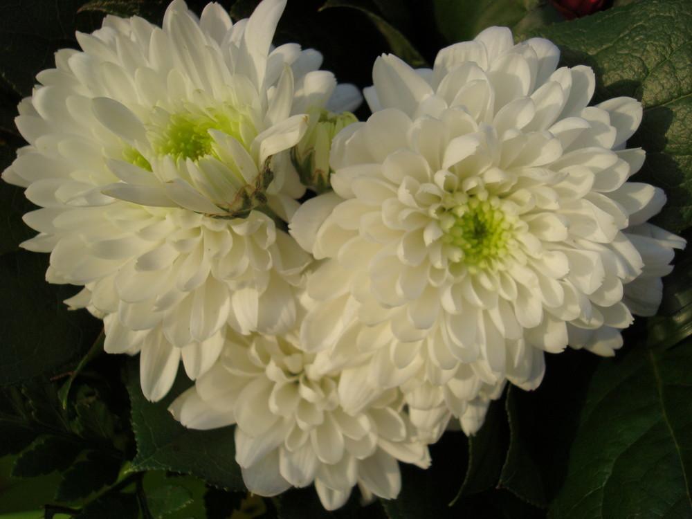 Fleurs en coeur