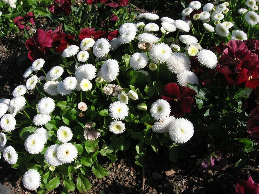 Fleurs esplanade