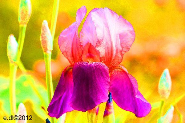 fleurs et amours