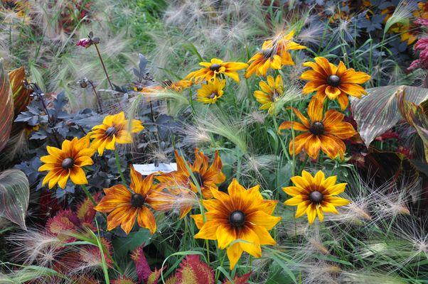 Fleurs et graminées et soleil .....!