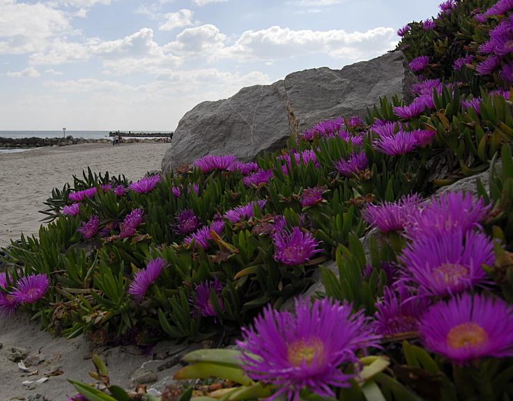 fleurs et roche